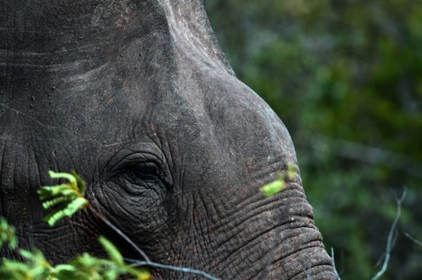 Sri Lankans Charged Over Traffic In Baby Elephants